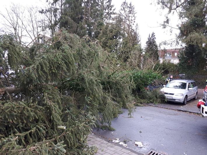 Büren-Brenken - Baum auf Auto