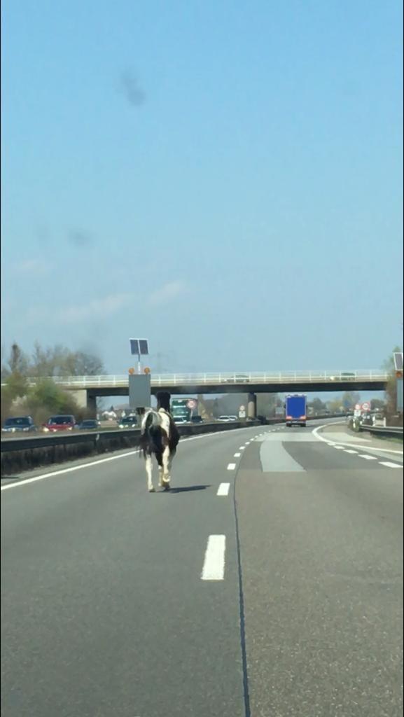 Mit einer Pferdestärke auf der Autobahn unterwegs