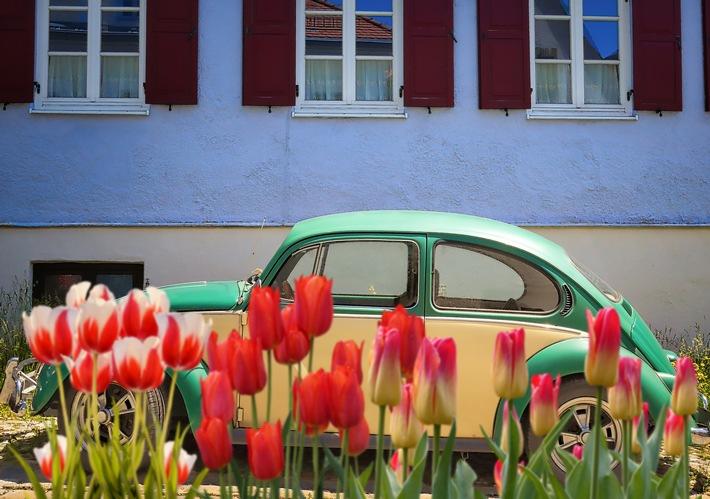 deutscher-vw-niederl-tulpen.jpg