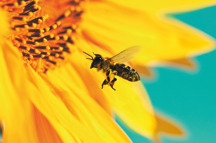 """Zweite Bienen-Schwerpunktwoche in """"Kaffee oder Tee"""""""