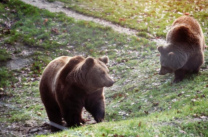 Die beiden ehemaligen Zirkusbären entdecken im BÄRENWALD Müritz ein komplett neues Leben (c) VIER PFOTEN, Christopher Koch