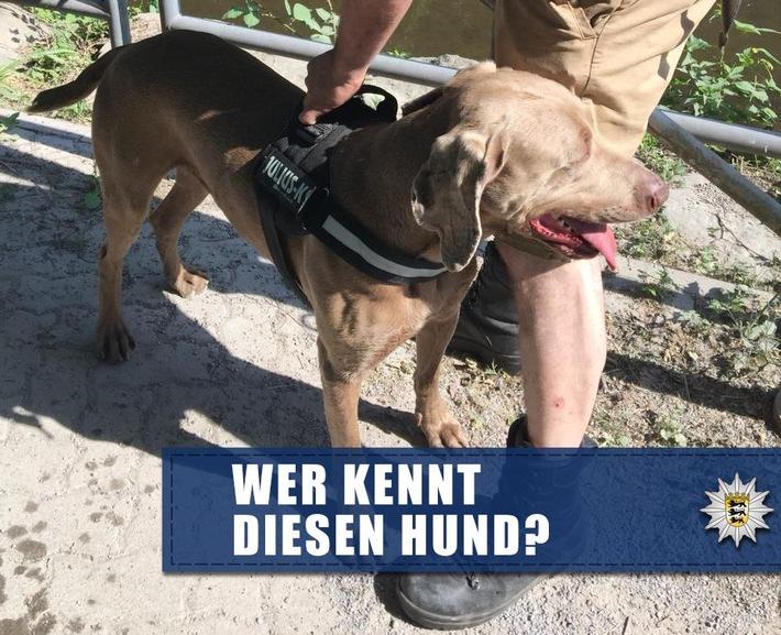 POL-KA: (KA) Karlsruhe - Frau durch Hundebiss verletzt - Suche nach Hundebesitzer