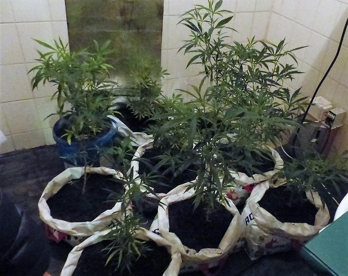Polizei Düren: Cannabispflanzen Josefstraße