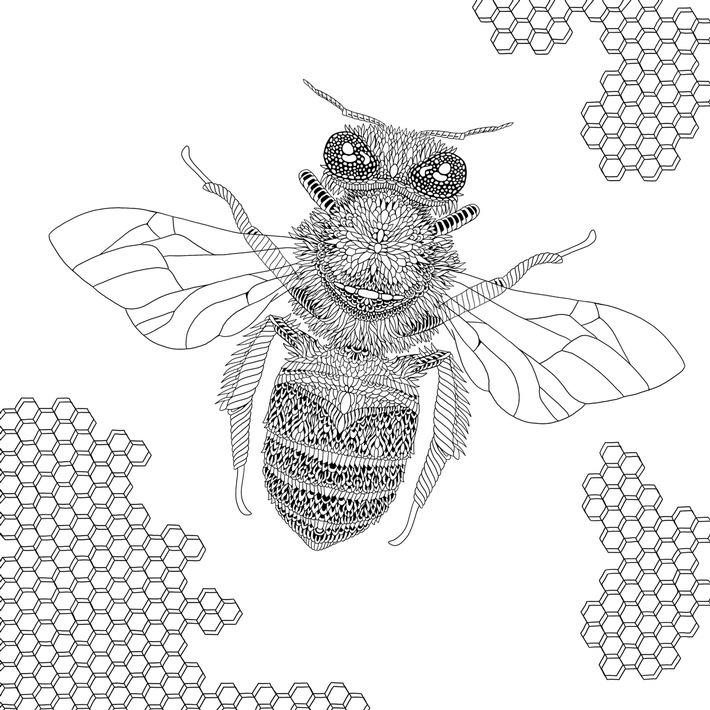 """Die Dunkle Europäische Biene (Apis Mellifera Mellifera) / Weiterer Text über ots und www.presseportal.ch/de/nr/100062117 / Die Verwendung dieses Bildes ist für redaktionelle Zwecke honorarfrei. Veröffentlichung bitte unter Quellenangabe: """"obs/Bergli Books an Imprint of Schwabe Verlag AG Basel"""""""
