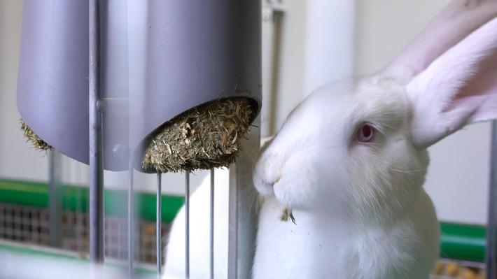 """Bundesweit einmaliges Kaninchen-Projekt verbessert Haltung von Kaninchen. Foto: Kaufland. Weiterer Text über ots und www.presseportal.de/nr/111476 / Die Verwendung dieses Bildes ist für redaktionelle Zwecke honorarfrei. Veröffentlichung bitte unter Quellenangabe: """"obs/Kaufland"""""""