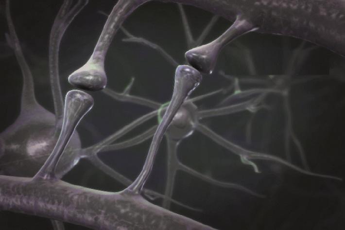 """Mit einer einzigartigen patentierten Nährstoffkombination adressiert Souvenaid® den bei Alzheimer-Krankheit typischen Verlust von Nervenzellkontakten (Synapsen) im Gehirn, welche für die Gedächtnisleistung wichtig sind. Copyright: Nutricia GmbH Die Verwendung dieses Bildes ist für redaktionelle Zwecke honorarfrei. Veröffentlichung bitte unter Quellenangabe: """"obs/Nutricia GmbH"""""""