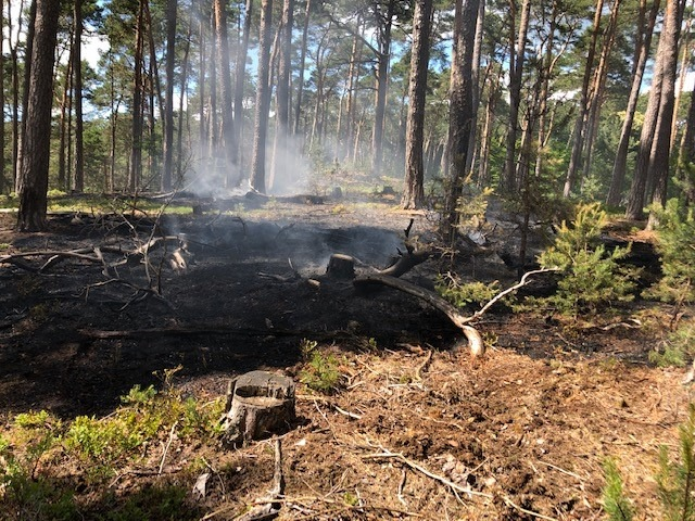 Brand in einem Wald