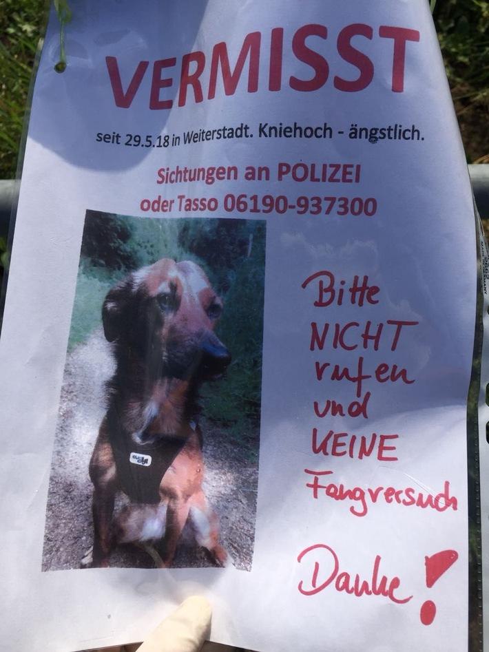 Mit diesem Plakat suchten die Besitzer nach Penny.
