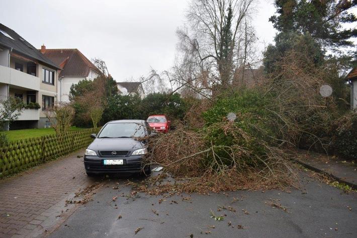 Die umgestürzten Bäume verfehlten nur knapp die Fahrzeuge