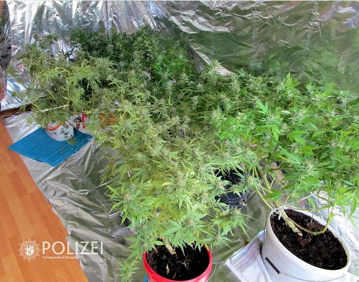 In einer Wohnung in der Kaiserslauterer Innenstadt fanden Drogenfahnder am Montag diese Indoor-Plantage.