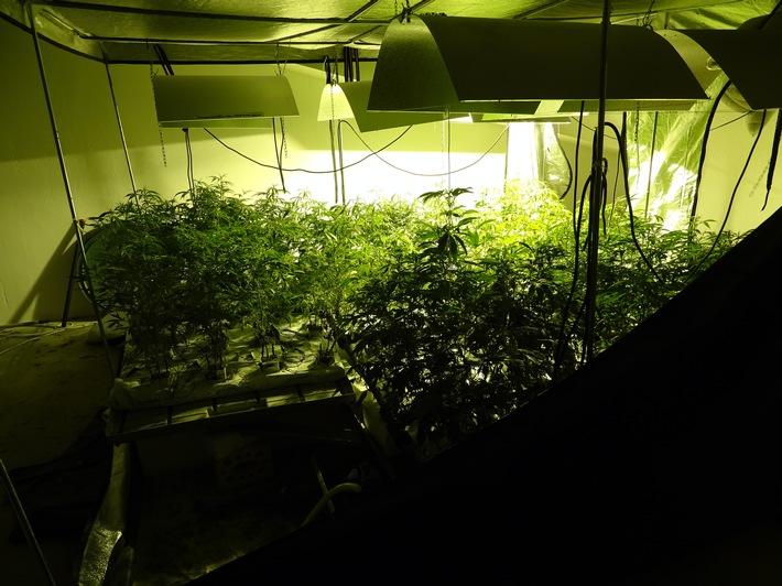 POL-SE: Kisdorf  - Sicherstellung einer Cannabisplantage in Kisdorf