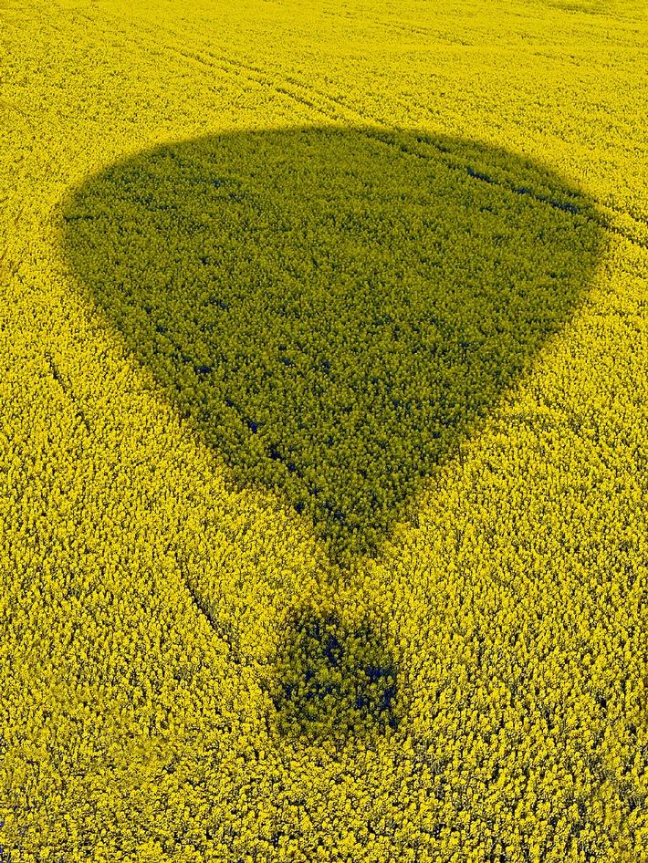 Fortschrittliche Biokraftstoffe lassen auf sich warten