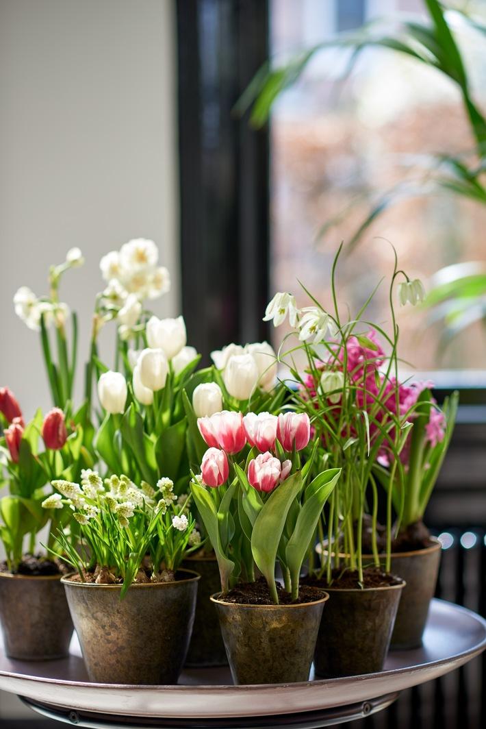 Auf Wiedersehen, Winter - Hier kommt der Frühling- Diese Frühlingsboten lassen die Herzen höher schlagen