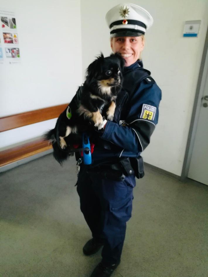 BPOL-TR: Herrchen hilflos -Chihuahuadame kommt bei Bundespolizei unter