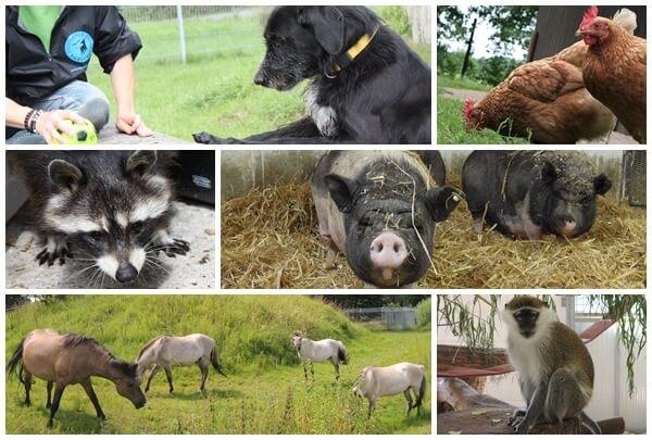 Presseeinladung: 15 Jahre Tierschutzzentrum Weidefeld