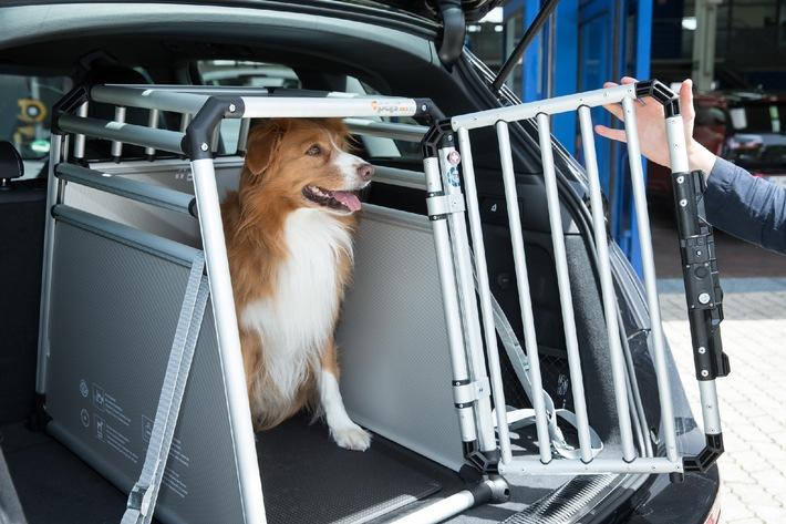 """En voiture aussi, les chiens doivent être attachés Texte complémentaire par OTS et sur www.presseportal.ch/fr/pm/100008591 / L'utilisation de cette image est pour des buts redactionnels gratuite. Publication sous indication de source: """"OTS.photo/Allianz Suisse/Stefan Heigl"""""""