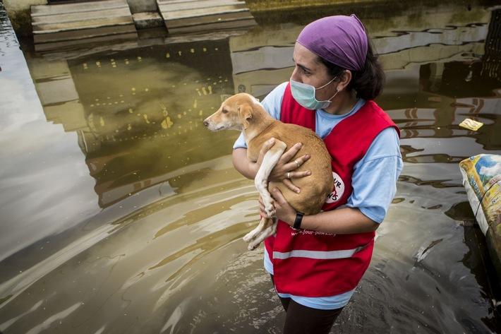 Jahrhundert-Fluten in Chennai: VIER PFOTEN hilft betroffenen Tieren