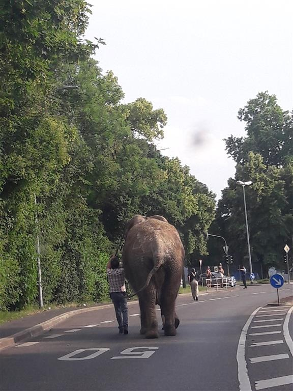 POL-PDNR: Ein Elefant auf Abwegen