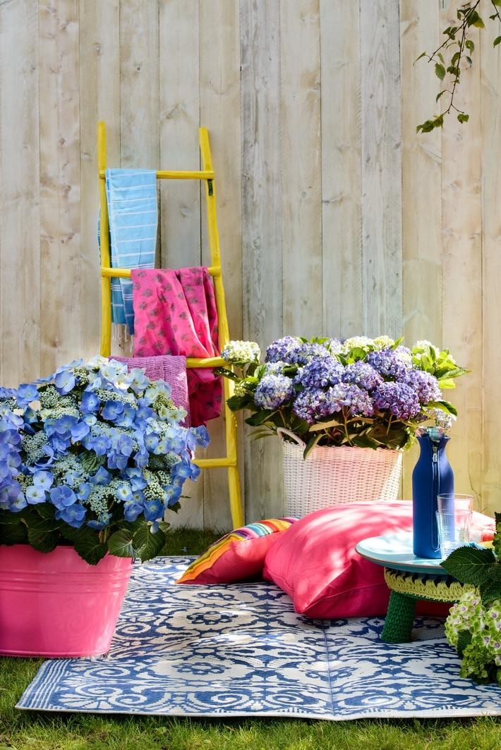 Happy Life im heimischen Garten / Farbenfrohes Sommerfest mit der Gartenhortensie