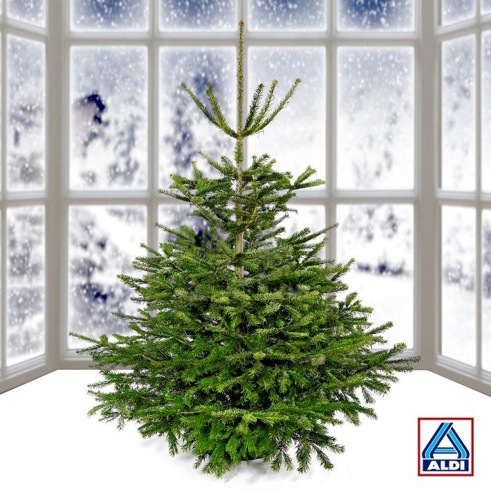 Weihnachtsbaum von aldi nord