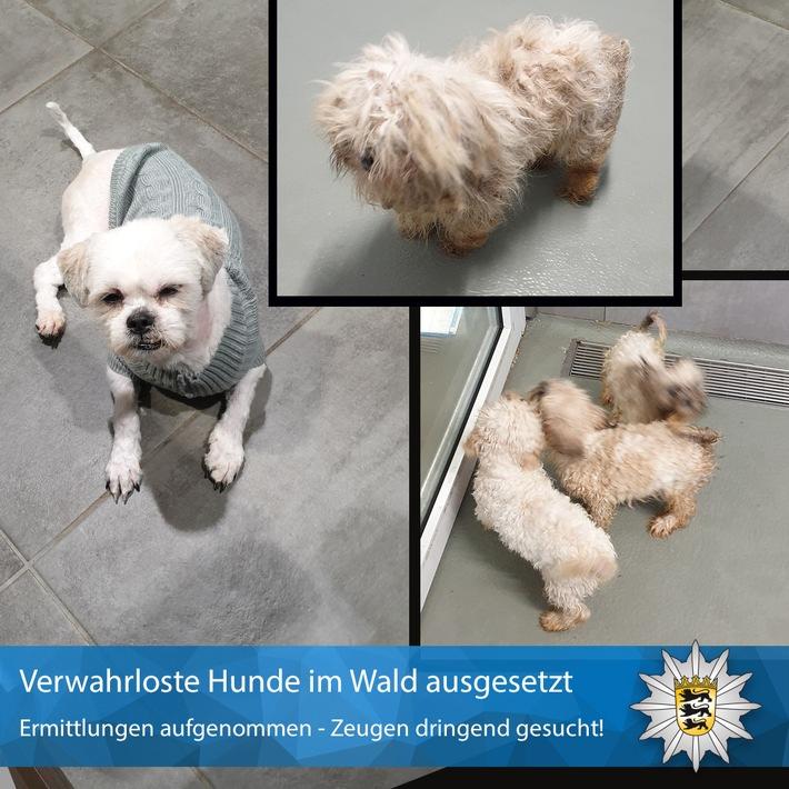 POL-MA: Wiesenbach-Langenzell, Rhein-Neckar-Kreis: Fünf Hunde im Wald ausgesetzt; Polizei sucht Zeugen