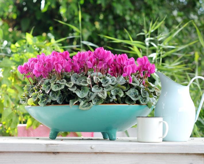 Geliebte ▷ Überraschend draußen: Zimmerpflanzen zur Sommerfrische auf #BZ_15