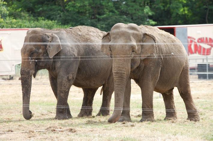 Wildtiere im Zirkus: Bundesratsinitiative auf wackligen Beinen