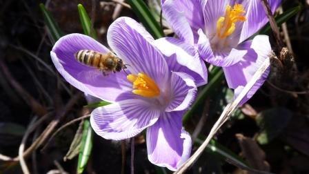 Lebensbedrohliche Insektengift-Allergie