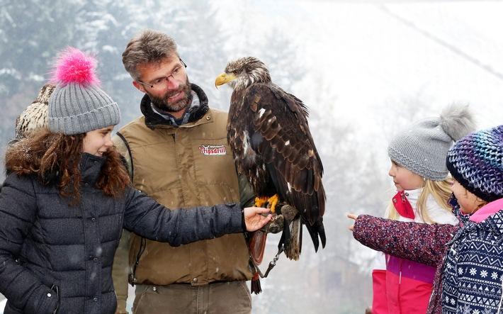 Die Greifvogel-Flugschau findet im Winter an allen Wochenenden und in den Ferien statt