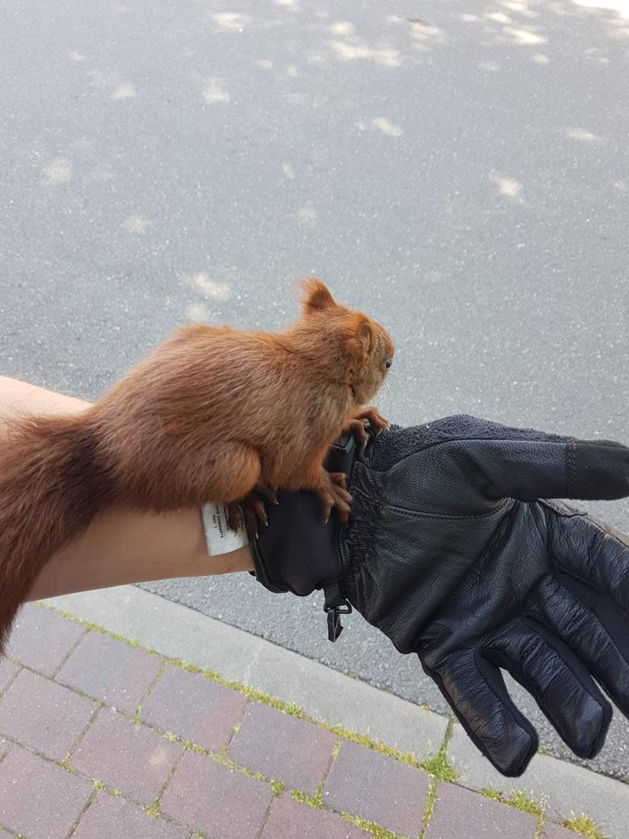 POL-HL: OH-Heiligenhafen / Die Eichhörnchen-Retter