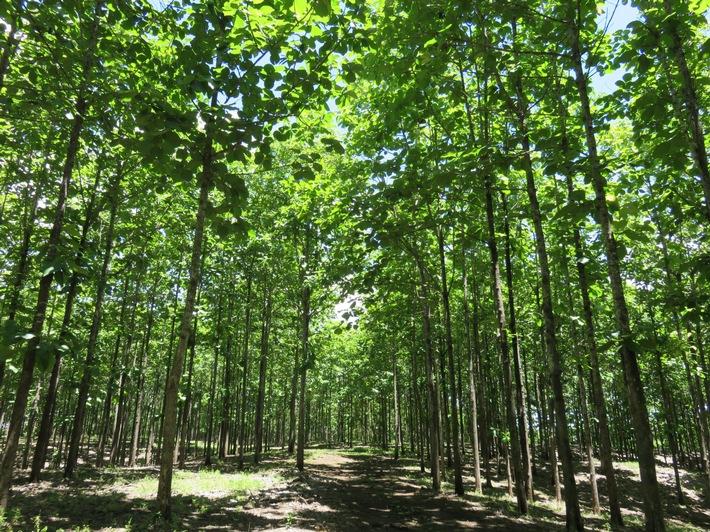 Life Forestry Group: Sind Nachhaltigkeit und Rendite vereinbar?