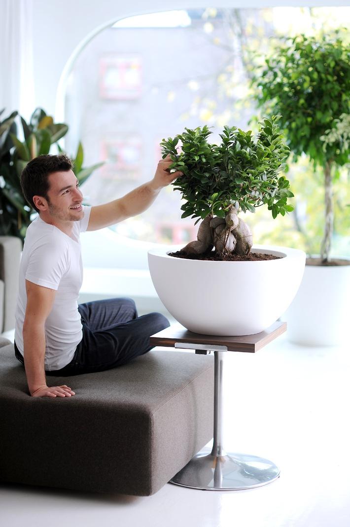 Ficus ist Zimmerpflanze des Monats Februar / Der exotische Ficus verbreitet Ruhe und Entspannung (mit Bild)