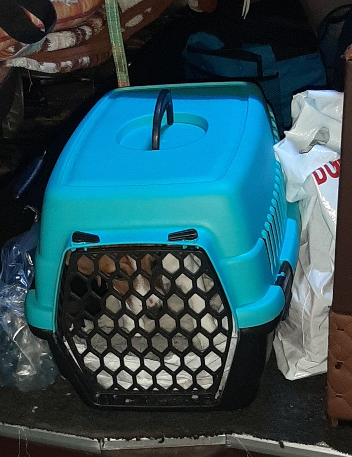 HZA-A: Hundeschmuggel - Zoll findet Jack Russell Terrier Welpen
