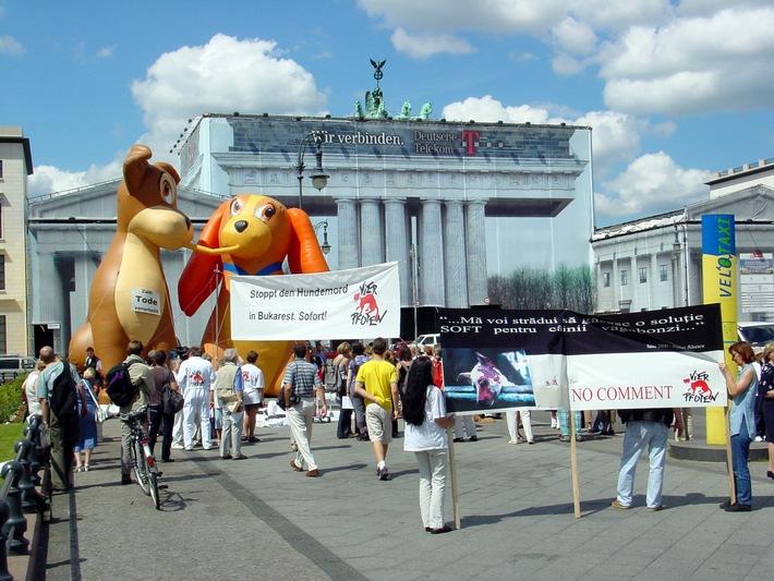 Stoppt den Hundemord in Bukarest!