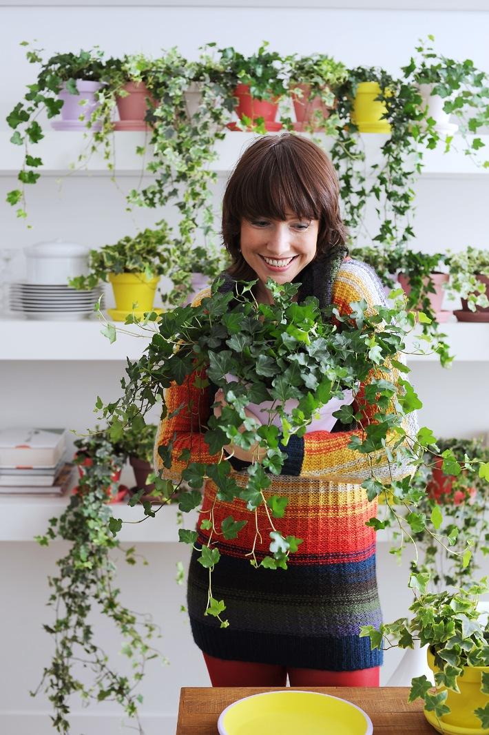 """Hedera ist die Zimmerpflanze des Monats Januar. Sie ist pflegeleicht, ein treuer Freund und dabei vielseitig und farbenfroh. Die Verwendung dieses Bildes ist für redaktionelle Zwecke honorarfrei. Veröffentlichung bitte unter Quellenangabe: """"obs/Blumenbüro Holland"""""""