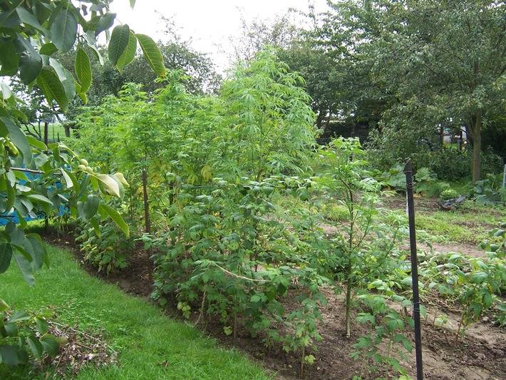 POL-HI: Elze/Sorsum - Cannabis-Pflanzen sichergestellt