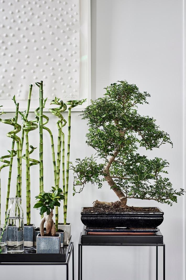Zen-Pflanzen: Zimmerpflanzen des Monats Mai - Den Frühling entspannt ausklingen lassen