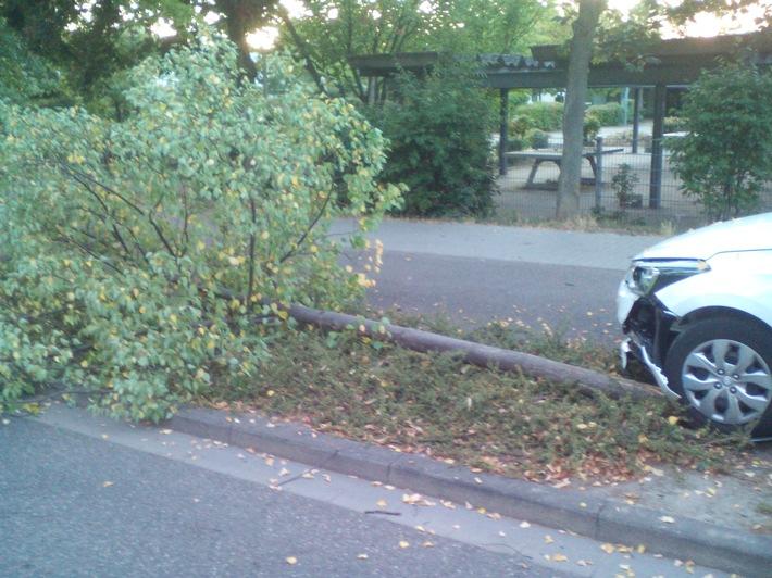 Baum Fritz-Ober-Straße