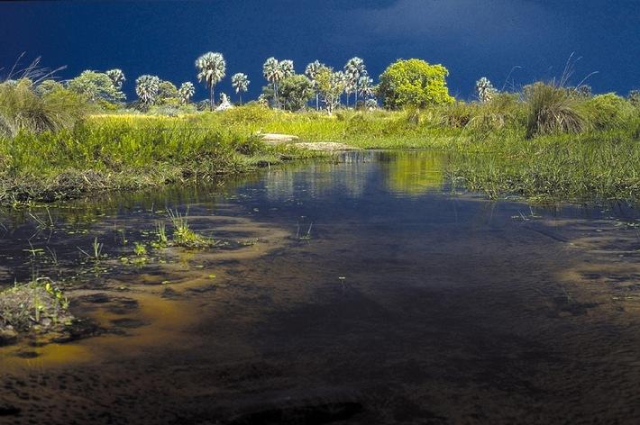 COMPAQ rettet die Afrikanische Wildnis / Einzigartige Wirtschafts- und Umweltkooperation auf der CeBit vorgestellt