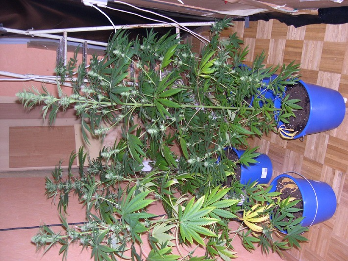 POL-H: Presseinformation der Polizeiinspektion Garbsen Ermittler finden Cannabis-Aufzuchtanlage