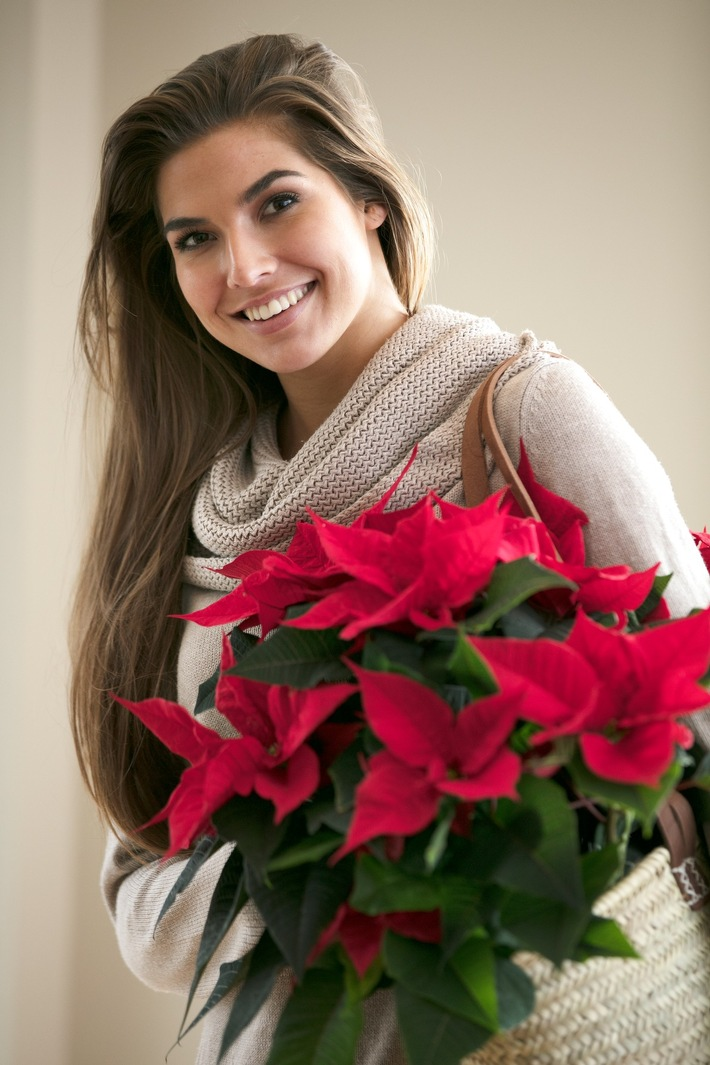 Prachtvoller Blickfang: Ein klassisch roter Weihnachtsstern besticht durch einfache Schlichtheit und unaufdringliche Eleganz und ist als Mitbringsel immer gern gesehen.
