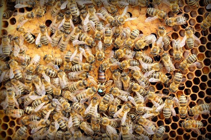 Der Wert der Biene