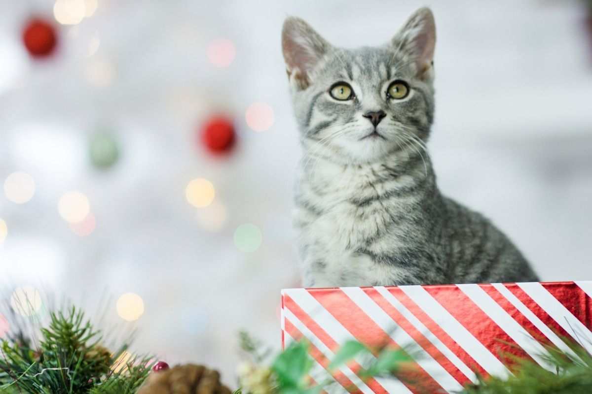Dem Weihnachtsbaum Unter Unter Dem