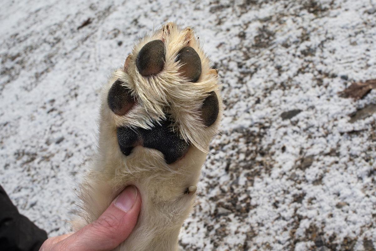 hund knabbert an pfoten