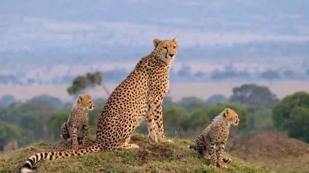"""Löwen, Geparde & Co.: 3sat zeigt zweiteilige Doku """"Die Großkatzen der Masai Mara"""""""