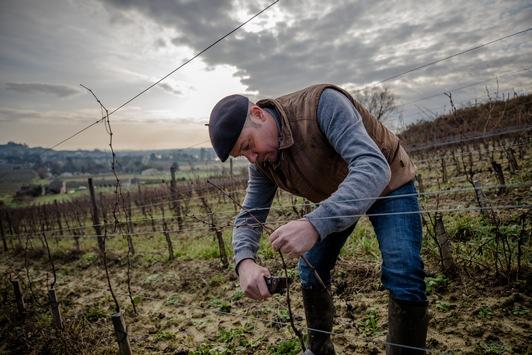 Innovation als Reaktion auf den Klimawandel: Bordeaux lässt sechs neue Rebsorten zu