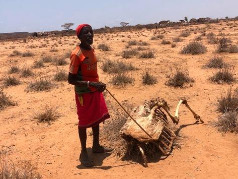 Kenia: Mehr als zwei Millionen Menschen von Dürre betroffen / Malteser und Johanniter helfen Bevölkerung in ländlichen Regionen