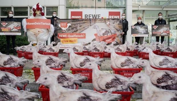 Protest gegen Qualfleisch bei Rewe: 62 Hühner vor Rewe-Sitz in Teltow