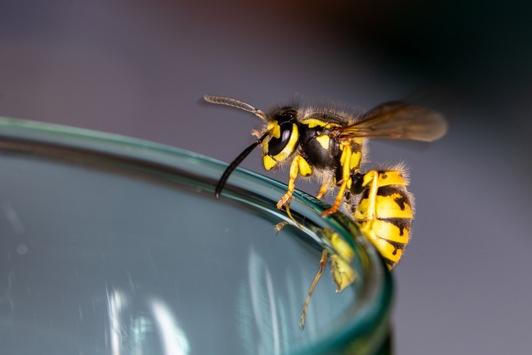 Apothekertipp: Schnelle Hilfe nach einem Wespenstich