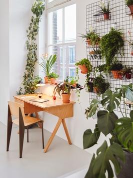 Entspanntes Arbeiten im Homeoffice dank Zimmerpflanzen / Ideen für einen inspirierenden Arbeitsplatz